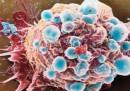Salute. Cancro e farmaci, quello che c'è da sapere: ecco il decalogo