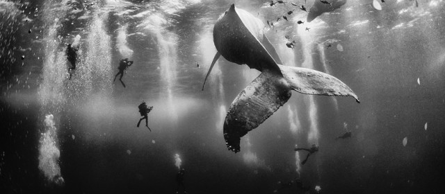 Primo premio, Whale whisperers, Isole Revillagigedo, Messico. (Anuar Patjane Floriuk, National Geographic traveler photo contest)