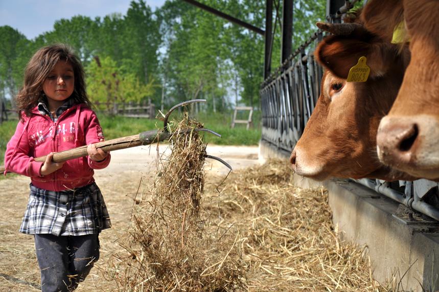 La crisi in fattoria mette a rischio il made in italy l for Planimetrie storiche della fattoria