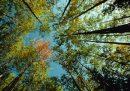 Foreste Abruzzo, con Testo Unico importanti prospettive