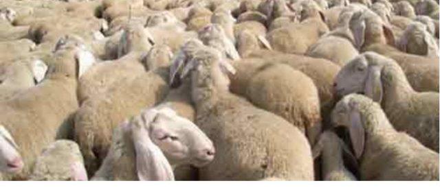 Terremoto: a 3 anni dalle scosse agricoltori e pastori in piazza